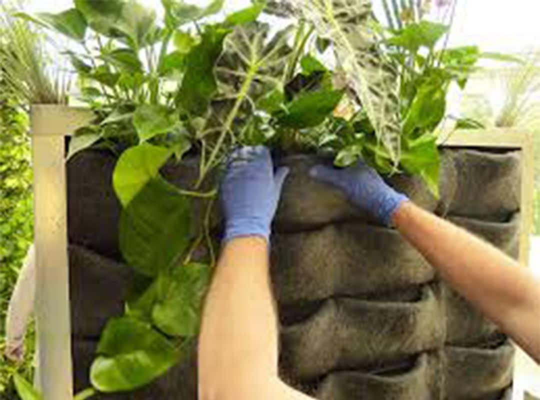 dikey bahçe, dikey bahçe sistemleri, dikey bahçe tasarım, balkonda dikey bahçe, yapay dikey bahçe, dikey bahçe modülü, dikey bahçe fiyatları, dikey bahçe bitkileri, dikey bahçe nedir, ibb dikey bahçe, dikey bahçe seti, dikey bahçe yapımı, dikey bahçe nasıl yapılır, dikey bahçe malzemeleri, yeni nesil dikey bahçe sistemleri, dikey bahçe ve dikey bitkilendirme uygulamaları, dikey saksı, dikey peyzaj, dikey bahçe m2 fiyatı, yapay dikey bahçe fiyatları, dikey bahçe fiyat, dikey çiçeklik, dikey bahçe çiçekleri, düşey bahçe, dikey bitkilendirme, dikey bahçe balkon, dikey bitkilendirme bahçe, iç mekan dikey bahçe, dikey bahçe iç mekan, dikey bahçe uygulamaları, ekoplas dikey bahçe, dikey bahçede kullanılan bitkiler, dikey bahçe bitkileri nelerdir, yosun dikey bahçe, dikey yapay bahçe, dikey bahçe bakımı, dikey bahçe bitki türleri, dikey bahçe çeşitleri, dikey bahçe keçesi, dikey bahçe keçe, dikey bahçe peyzaj, evde dikey bahçe nasıl yapılır